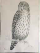 Fedden Owl (large)